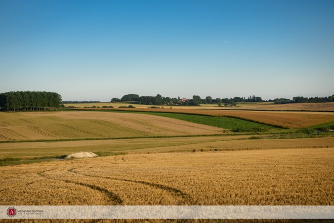 The fields of the North of France