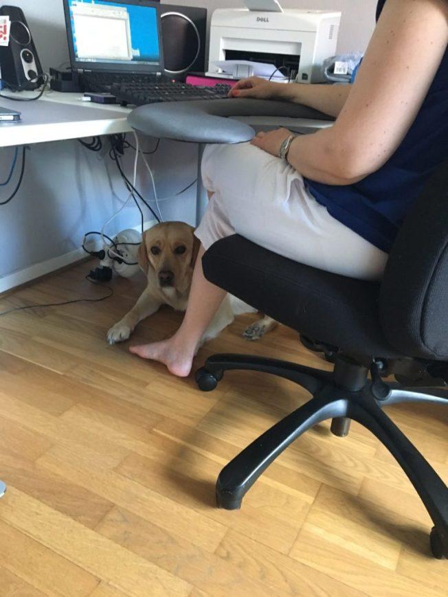 Foto på Chanti under skrivbordet vid mina fötter