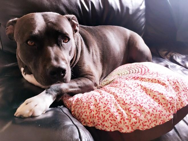 Non è stupenda la mia Iris sul suo nuovo cuscino?!