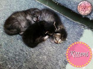 Kittens - Anna Can Do It!