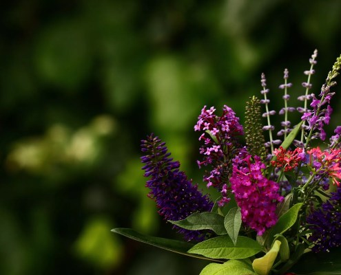 bienestar mindfulness naturaleza