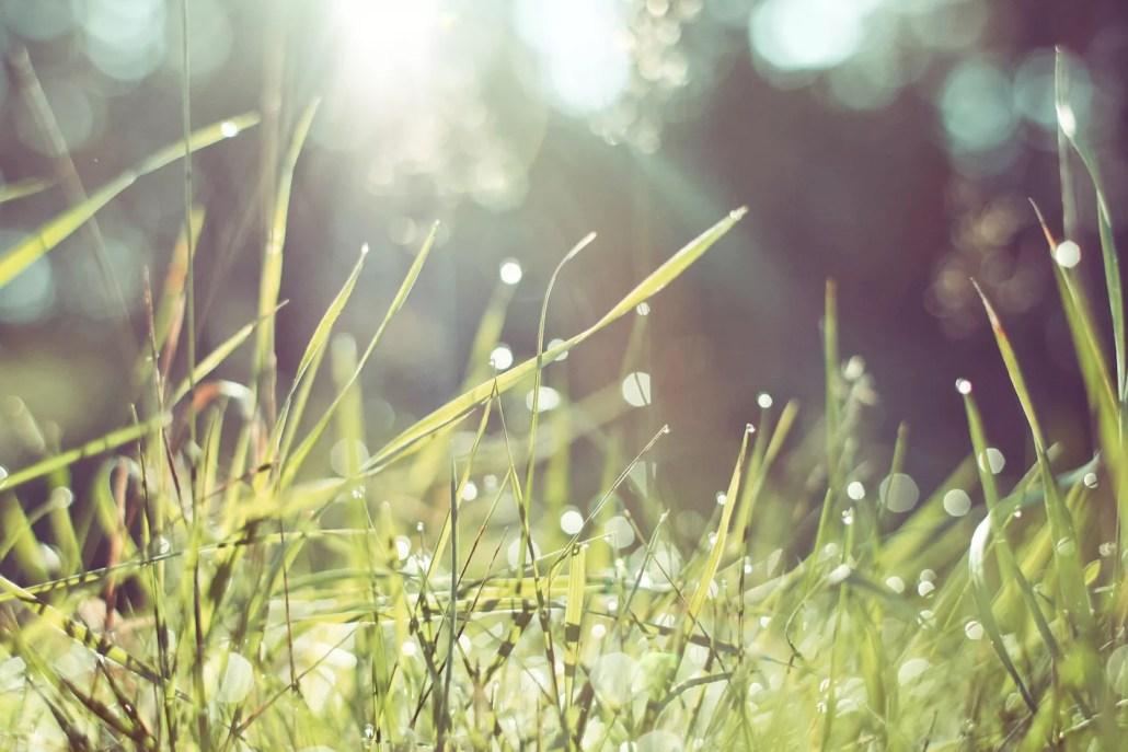 césped húmedo - momento presente - mindfulness