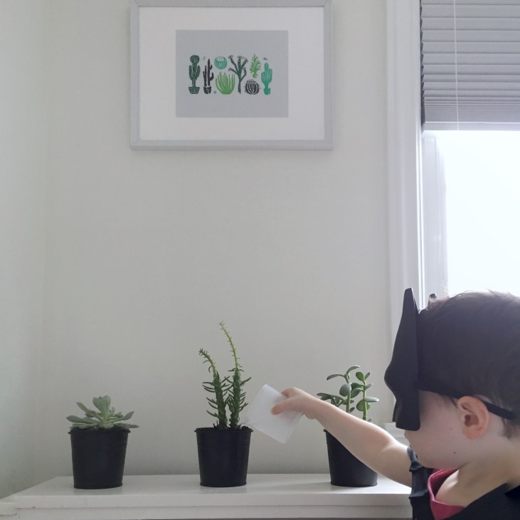 a little boy wearing a batman cape and mask is watering a cactus on his book shelf, above the cactus is a framed print of cactus's