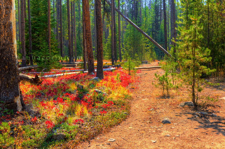 Landscape Design Boise