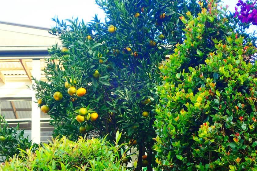 Mandarin Tamborine Mountain