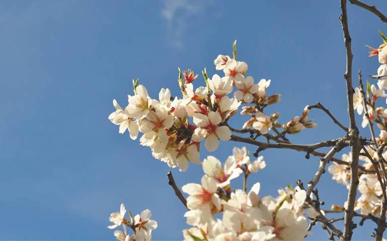 volti trasformati nella preghiera la primavera rinasce nel cuore