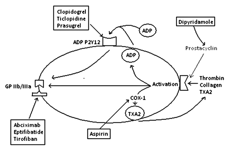 Aspirin And Plavix Moa Pictures to Pin on Pinterest