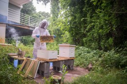Chef Erik keeps the apiary buzzing along.