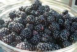 Borden - Bowl of Blackberries