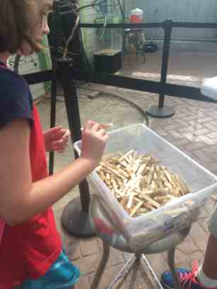 Toledo Zoo Keet Retreat Picking a Feed Stick