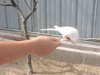 Toledo Zoo Keet Retreat Eating Upside Down