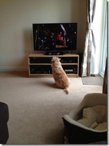 Alfie TV