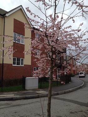 First blossom 2014