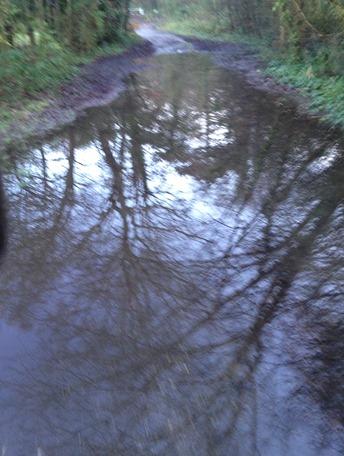 Netley Abbey puddle