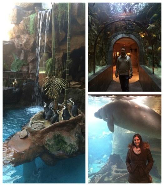 Dallas Aquarium 2015