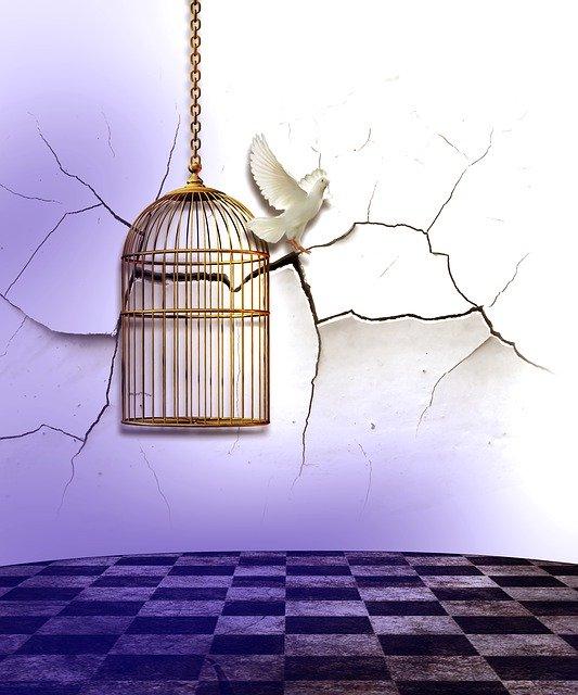 Un guide de survie ou de retour à la vie en période de confinement