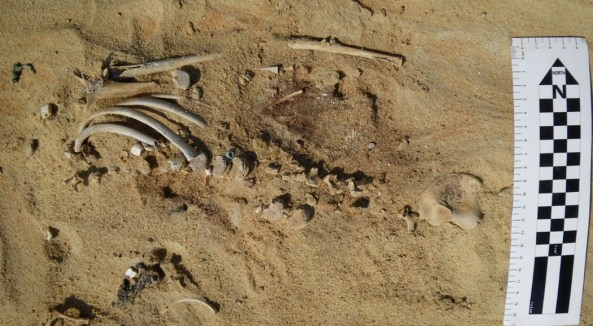 This infant's remains were exposed on the surface due to erosion.