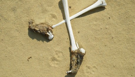 Due to the fast desiccation of the desert, skin is often still found mummified on feet at Karanis