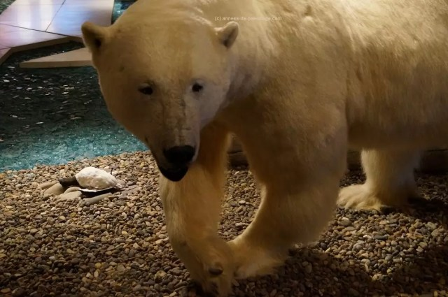 Numbers 7 on your list of things to do in Spitsbergen: Visit the Svalbard Museum and see the stuffed polar bear specimens