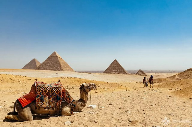 The pyramids of Giza near Cairo in Egypt with camel riders in the foreground