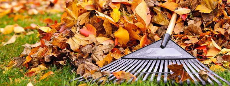 Anne Roberts Gardens premier_landscaping_tip_-fall-cleanup