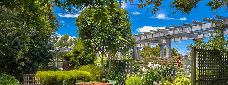 Anne Roberts Gardens shade-tree