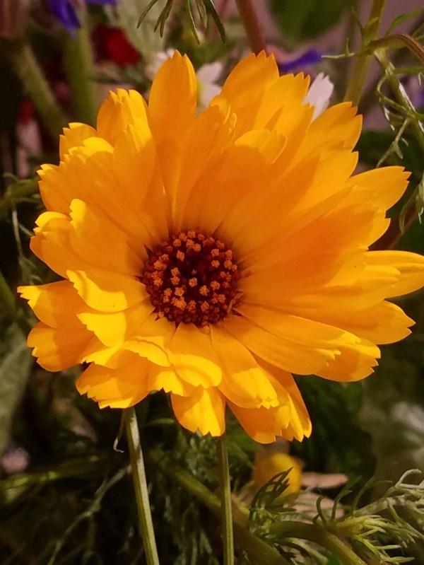 Art Beautiful Flower Arrangements