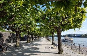 Beueler Rheinpromenade im Frühling