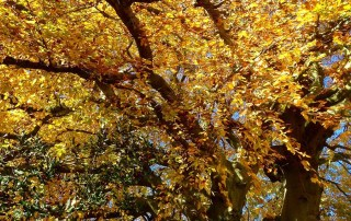 Trees are good for our health | Forest Therapy - Annette Sloly Hypnotherapy