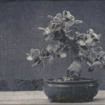 bonsai-igroot-2009w