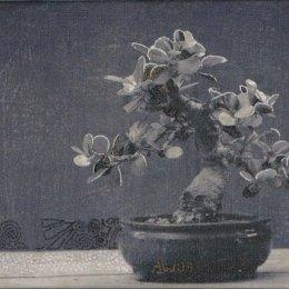 Bonsai #3