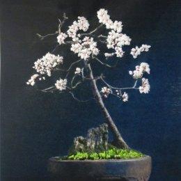 Bonsai #9