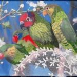 papagaaien-img_9190-w