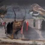 Reisverhalen (China #2), 2012