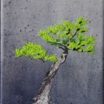Bonsai-II-2009