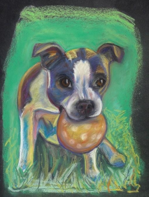 Got Balls? Boston Terrier