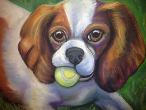 Got Balls - King Charles Cavalier Spaniel with tennis ball