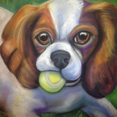 Got Balls - King Charles Cavalier Spaniel with tennis ball