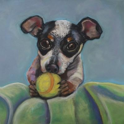 Got Balls - Aussie Shepard puppy with tennis ball