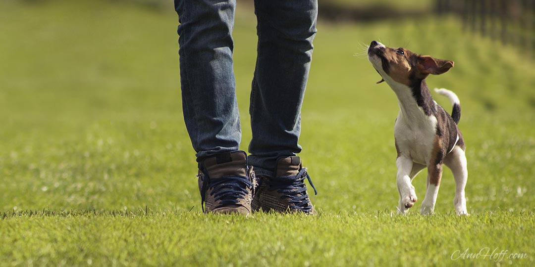 Important Considerations Before Becoming a Dog Owner