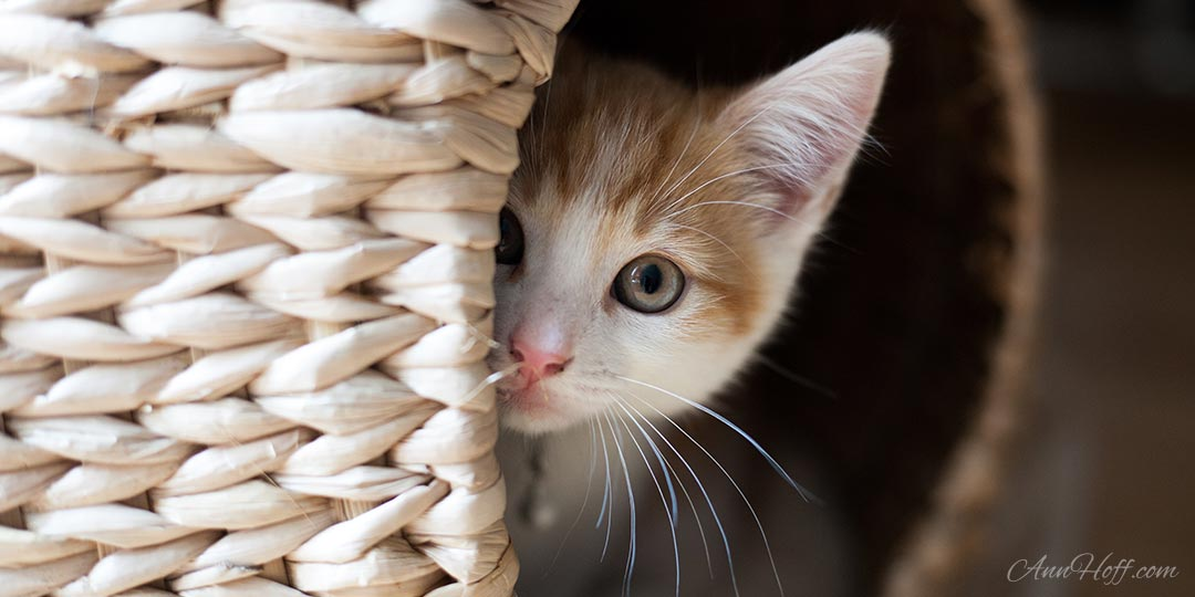 Let Meow Out! The Real Reason Your Cat Isn't Loving Life Indoors