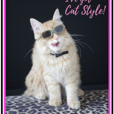 I've got cat style t-shirt