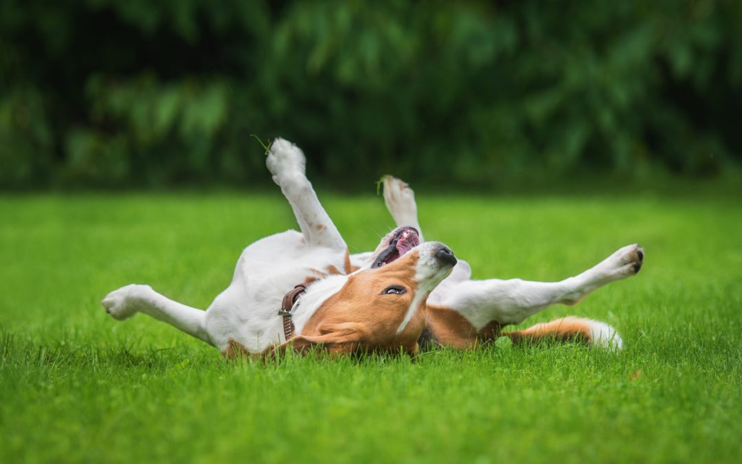 Tips To Ensure Your Dog Stays Happy & Healthy