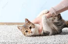 How Do You Entertain a Bored Cat?