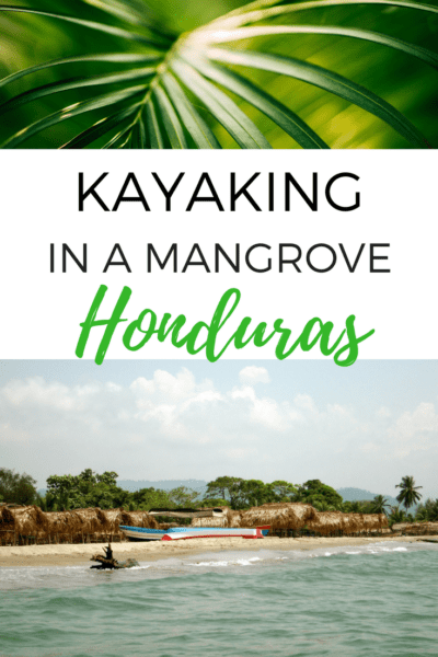 We explore wild life in the mangrove during a tour with Garifuna Tours. Starting in Tela, it was highlight of my trip in Honduras! #kayak #honduras #centralamerica #wildlife
