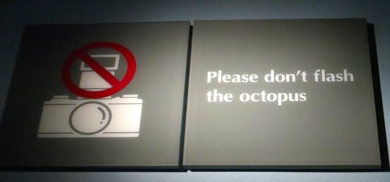 Monterey Aquarium: Don't flash the octopus