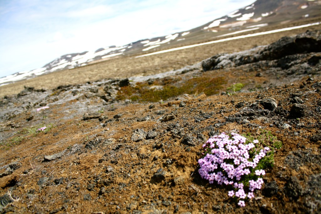 Flower growing in the volcanic ground