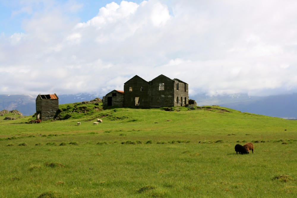 Icelandic landscape with sheeps