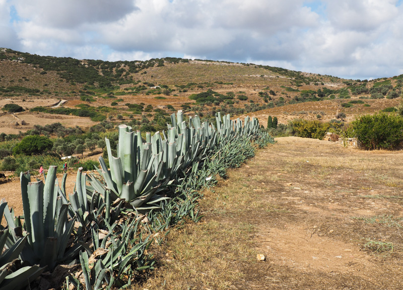 Vast field on Naxos Greek island
