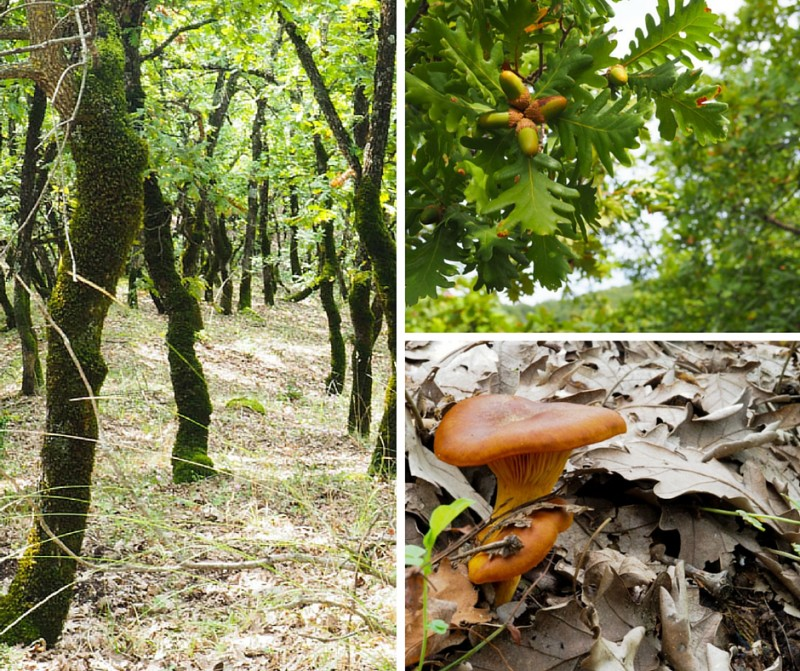 Hiking to Meteora - Forests and mushrooms